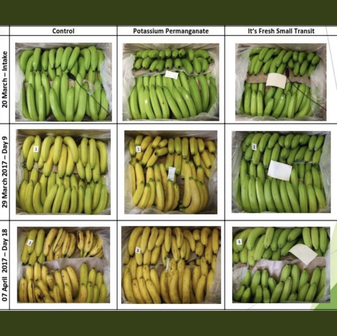 英食品保鮮公司發明的可回收濾紙,能吸收包裝盒內的乙烯,延長水果壽命大量減少水果浪費。(取材自推特)