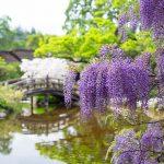 春神來了!網友齊分享絕美花景