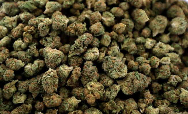 黃美穎認為,大麻是危險性最小的娛樂藥物。(美聯社)