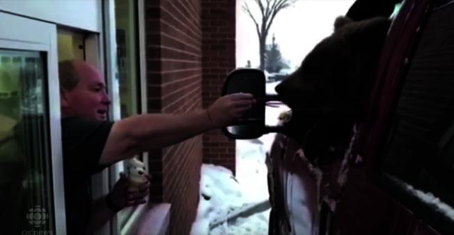 加拿大亞伯達省一間動物園,為了幫園內一隻熊慶祝一歲生日,載著牠到當地冰淇淋店「冰雪皇后」得來速窗口吃冰淇淋。(取材自YouTube)