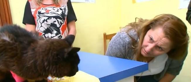 黑貓失蹤14年後,竟在街頭被動物保護組織發現,隨後更為牠找回主人。(視頻截圖)