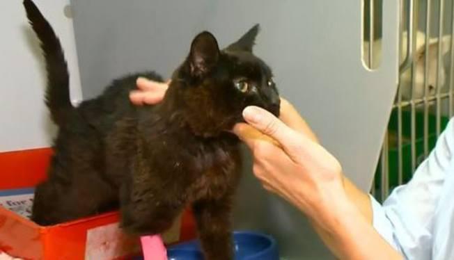 獸醫表示,黑貓年屆18歲,卻非常健康。(視頻截圖)