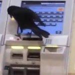 想搭電車?烏鴉搶人信用卡買票