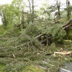 〈圖輯〉風暴強襲美東北 街道狼藉5人亡