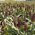 白宮聲明「中允諾加大採購美農產品與能源」 但未具體數字