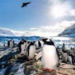 拉丁假期東森電視合作推出南極系列行程百內公園南極冰川 乘破冰遊輪上南極