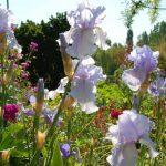 法國花花世界 藝遊莫内花園