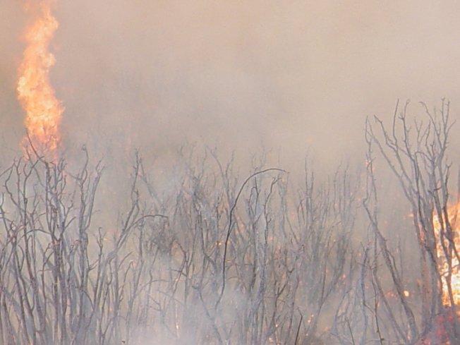一場從美墨邊境東南部迅速延燒的山火,在侵吞了數千畝山林後,於6日上午9時45分蔓延至聖地牙哥縣。(取自Cal Fire推特)