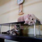 谷內郡動物收容中心 6月認養寵物大減價