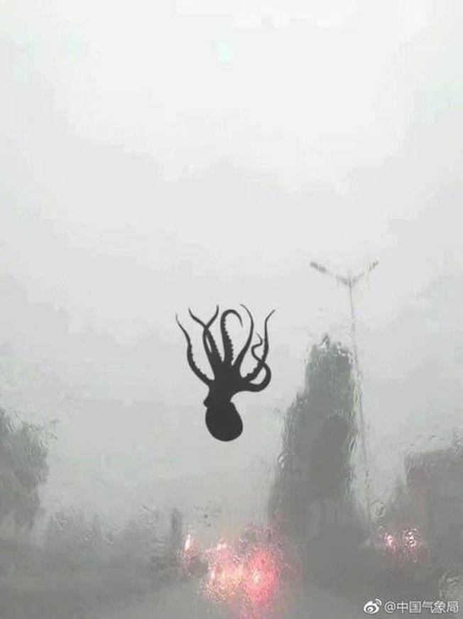 一隻章魚從海裡被吹上車輛擋風玻璃。(取材自微博)