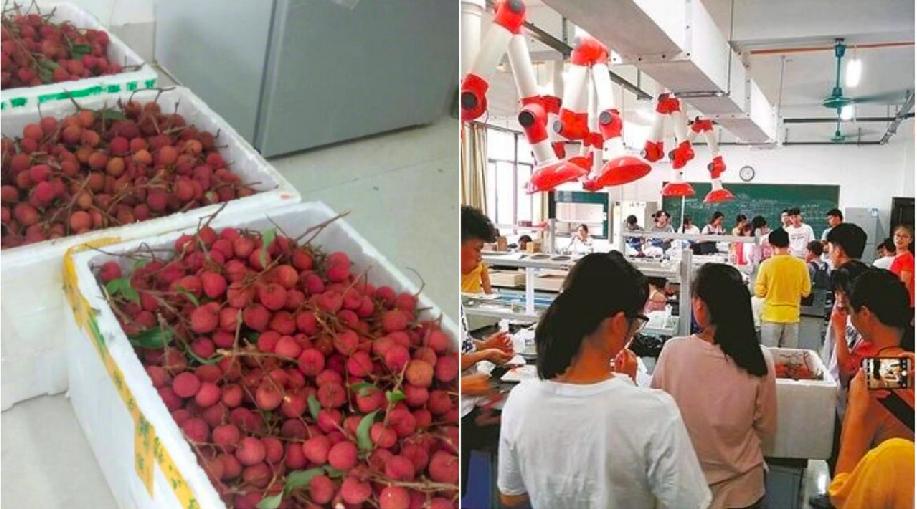廣西中醫藥大學傳出要學生吃400公斤荔枝,以便進行做藥劑學實驗。(取材自中新網)