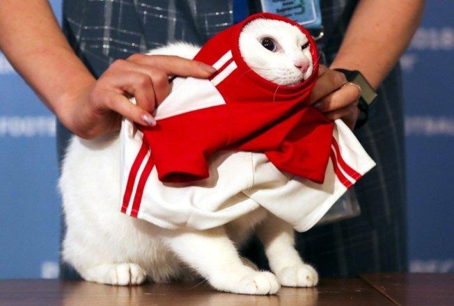 俄羅斯神貓「阿基里斯」預料將成本屆世足焦點。 歐新社