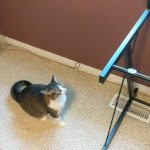 傻貓想征服玻璃桌 縱身一躍卻發現不對勁