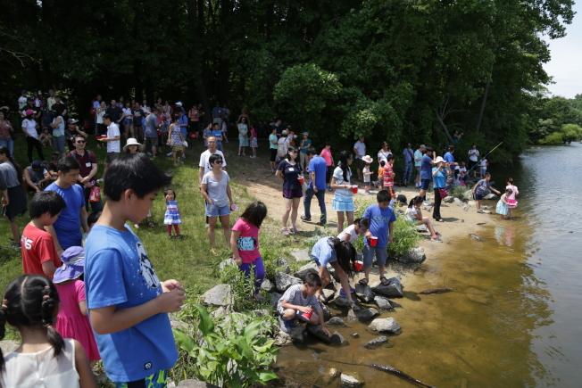 馬州哈維郡華裔家長聯合會(CAPA-HC),舉行端午節賑災野餐會及龍舟表演。200多名華人圍在岸邊觀賞,近距離體會傳統文化。(記者羅曉媛/攝影)
