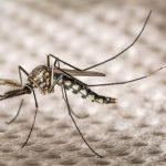 高溫潮濕引蚊蟲 芝城西尼羅病例提早出現