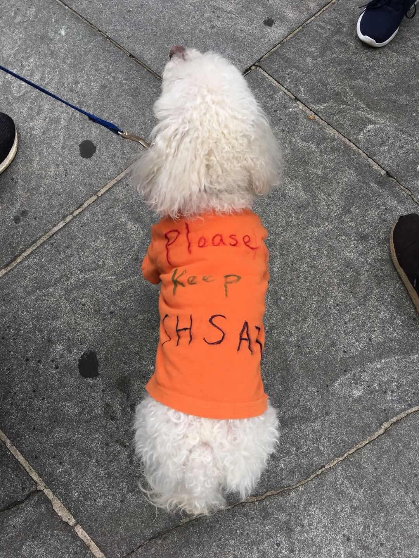 連家中的寵物狗也被帶上街。讀者Susan/提供