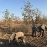 南非薩比森 動物樂園