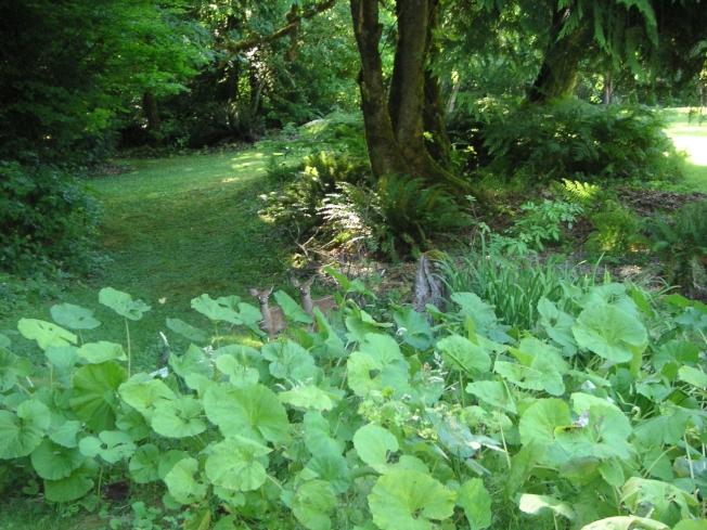 蜂斗菜自选坡地的边缘繁衍,恰到好处地点缀着枫树下的那片空地。