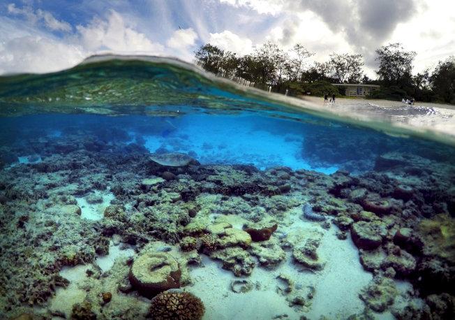 斯帕克發起「吸管運動」,鼓勵民眾共同減少塑膠垃圾,維護乾淨的海洋環境。(路透)