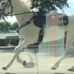 「馬」路驚魂 嚇壞駕駛