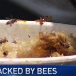 婦女遭蜂螫200多次 送醫命危