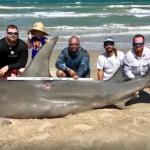 14呎巨鯊上岸氣絕 釣客被罵翻