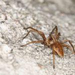 蜘蛛咬1口 糖尿病患痛失1條腿