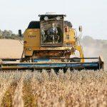 貿易戰掃到…美國黃豆狂跌 巴西飆新高