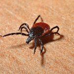 蟲蟲危機 新州小心四大惡蟲 被叮咬易感染