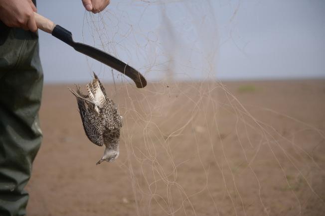 華人愛捕鳥吃鳥,小心會觸犯美國刑責,嚴重會遭遣返。(新華社資料照片)