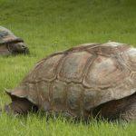 華府國家動物園 百歲巨龜安樂死