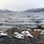 阿拉斯加海鳥死亡惡化…暖化害的
