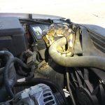 10呎巨蟒「霸占」車子引擎 女子求救