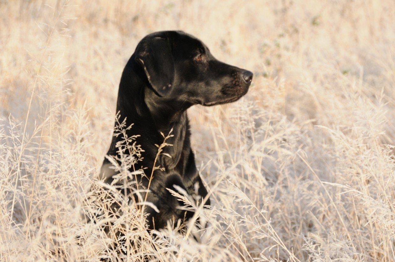 南韓公民請願「修法禁食狗肉」,青瓦台回應將積極考慮修改相關法規,將狗排除在家畜範圍之外。 Ingimage