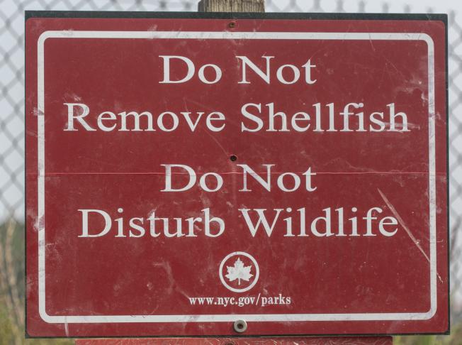 海濱掛著「不准撈捕貝殼,不要打擾野生動物」警告牌。(照片皆為作者提供)