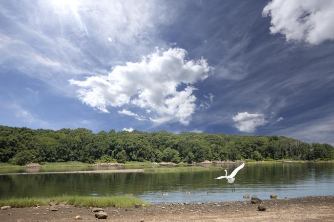 遠遠拍到淺水有隻白鷺展翅欲飛。(照片皆為作者提供)