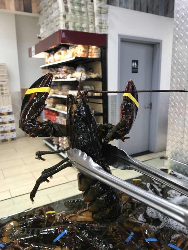 華人超市的特價龍蝦,一隻不到 10元。(張然提供)