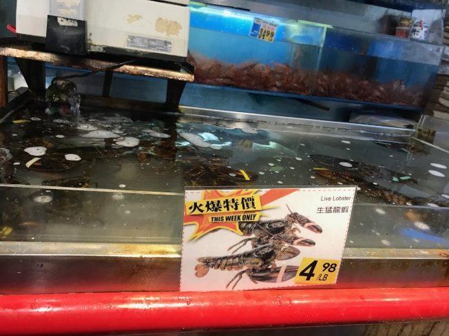中國對美國龍蝦加徵關稅,波及在美華商的出口生意,也造成龍蝦價格下滑。(記者邵冰如/ 攝影)
