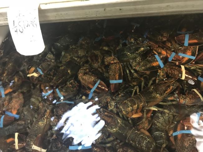 隨著中國對美國海鮮加徵一倍關稅,來自中國的龍蝦訂單銳減。(記者和釗宇/攝影)