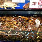 龍蝦轉內銷降價 超市、餐廳大賣