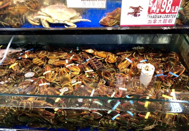 法拉盛的華人超市打出龍蝦每磅4.99元的低價。(記者朱蕾/攝影)