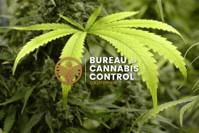 加州大麻控制管理局開始更嚴密取締未領取牌照的大麻商店。(取材自加州大麻控制管理局官網)