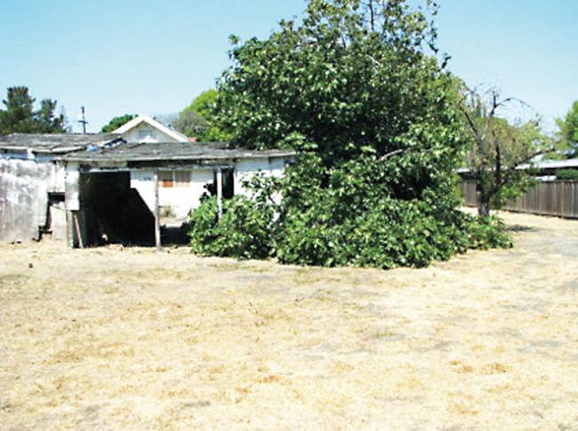 圖中老舊破爛的房子位於矽谷桑尼維爾市東穆迪街(E Maude Ave.)582號,由於有0.7英畝的土地,所以屋主索價490萬元。(圖:房地產公司提供)