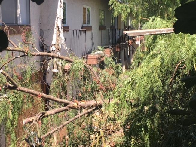 寶馬失控衝過路肩,撞倒樹木之後再撞上公寓樓。(記者楊青/攝影)