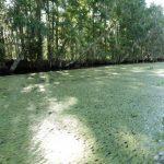 美國現象/紐奧良刺激遊 獵殺大鱷魚