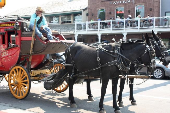 傑克遜鎮的牛仔駕觀光馬車。