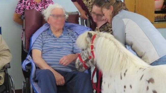 小型馬很受老人家的喜愛。(Pet Partners)