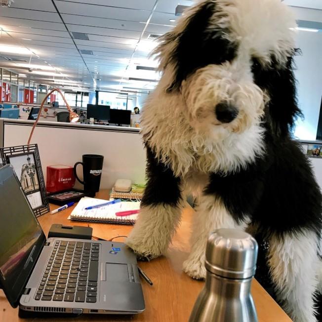 亞馬遜的員工每天都可以帶狗上班。(亞馬遜博客)