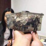 杭州小哥不想活 上網買蛇「自咬」…醒來喊「救我」
