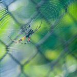 家裡的蜘蛛該殺?昆蟲學家告訴你